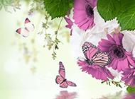 蝴蝶與花唯美意境ppt背景圖片