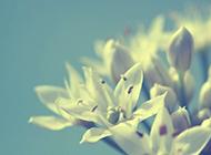 唯美非主流高清花朵壁紙