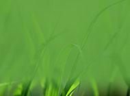 綠草模糊護眼綠色背景圖