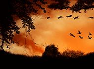 天空中飞行的鸟精美壁纸图片