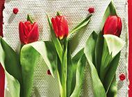 萬紫千紅的花兒唯美經典高清壁紙