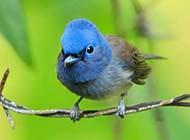 好看唯美的鸟高清动物壁纸