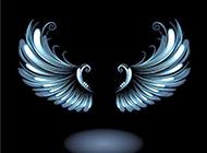 手型翅膀的黑色背景图片赏析