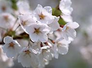 春暖花開精美鮮花高清桌面壁紙