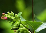 绿色小清新植物护眼电脑桌面壁纸