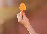 秋日萧瑟唯美落叶美景精致素材分享
