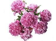 美丽芬芳的超大鲜花经典壁纸