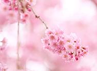 浪漫花世界唯美清新花卉高清壁纸