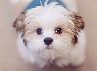 经典可爱狗狗壁纸大全