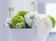 高清養眼舍內唯美花朵壁紙