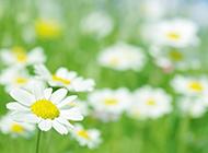 唯美花朵清新背景图片素材