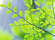 高清绿色护眼壁纸桌面