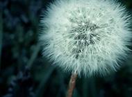 高清唯美植物花朵桌面壁纸