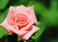 娇艳鲜花唯美浪漫植物风景图