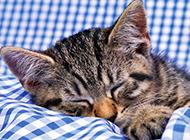 高清非主流可爱猫咪桌面壁纸