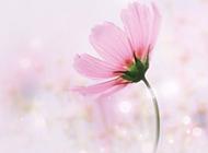 清新粉色系景物背景圖