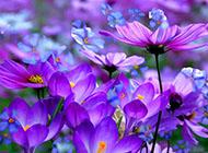 炫彩斑斓植物特写小清新壁纸