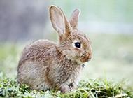 呆萌萌超可爱的兔子壁纸图片