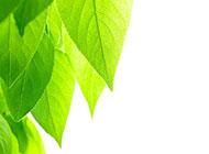 綠色樹葉背景高清圖片素材
