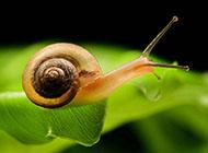 可爱动物微距蜗牛精美壁纸