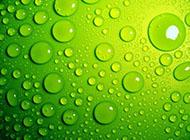 綠色水珠電腦桌面背景圖