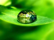 精選清新綠葉背景圖片素材