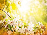 唯美阳光与鲜花高清背景图片