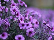 唯美植物近距拍摄个性风景图片