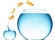 高清小清新鱼缸背景图 素材