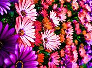 满屏的花卉高清电脑壁纸