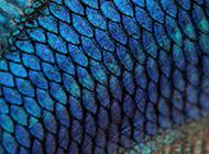 微信背景圖片高清藍色魚鱗
