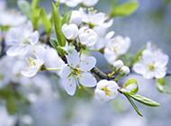 芬芳唯美清新花卉簡約壁紙