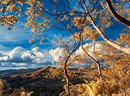 高清壁紙圖片唯美養眼森林景色