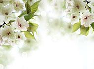 夢幻白色唯美花卉清新風格背景美圖
