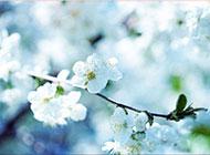 潔白淡雅桃花三月浪漫風景圖