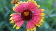 五彩植物花卉浪漫初春清新壁纸