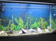 魚缸背景圖片大全黑色背景素材