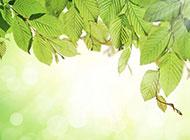 夢幻清新樹葉背景圖片素材