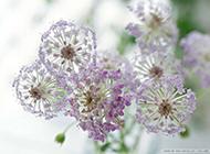 高清非主流靚麗花朵唯美壁紙