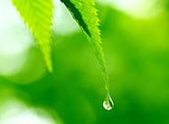 綠色葉子與露珠的聊天背景圖