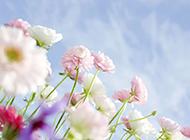山中烂漫鲜花盛放精美风景高清图片