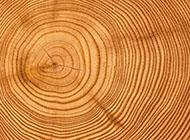 木頭圓形年輪時尚背景圖豎圖