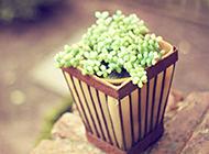 唯美小清新綠色多肉植物背景圖片