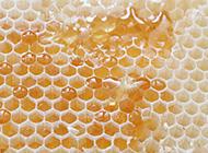 红金黄蜜蜂蜂巢底纹ppt背景图