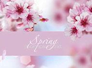 淡雅粉色花卉图片背景