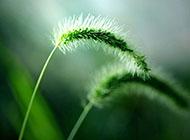 花草唯美小清新桌面壁纸高清风景图片