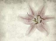 初中美術作業淡雅背景圖片