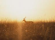 夕阳西下唯美背景图片