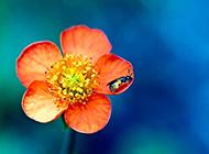 清新鲜花浪漫精致植物风景壁纸