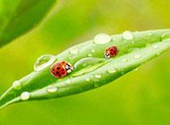 植物綠葉精美養眼壁紙